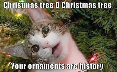 Cat Christmas Meme - piq forum thread this is for me and drderpey only