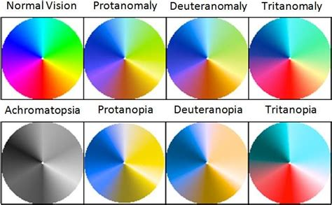 types of color blindness a comparison of the visible color spectrum in common types