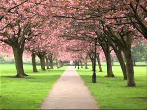 wallpaper bunga di taman pemandangan taman bunga sakura youtube