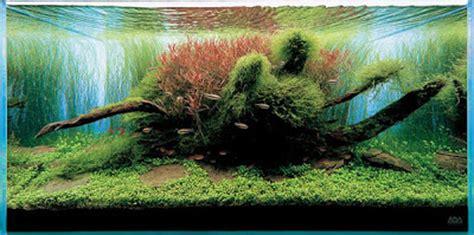 design aquascape pemula aquascape design aneka jenis aquascape