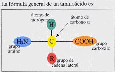 proteinas e amino cidos the true of a fabulous med student amino 225 cidos y