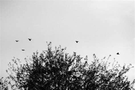 imagenes a blanco y negro tumbrl flores tumblr blanco y negro imagui