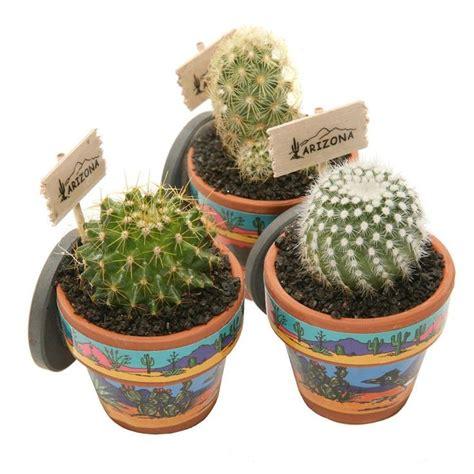Mini Cactus mini cactus magnets these mini cactus magnets feature live cactus grown in arizona planted in