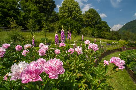 il giardino d europa pieve tesino visite guidate al giardino d europa de