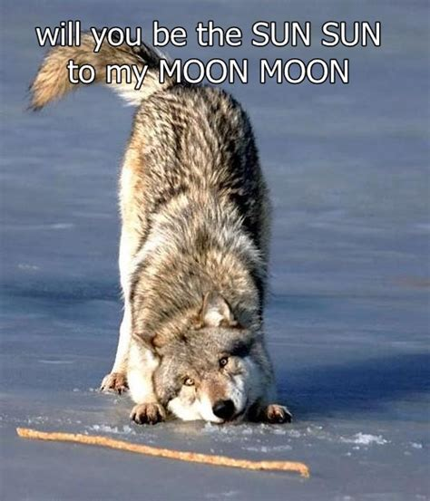 moon burned the wolf wars books image 534602 moon moon your meme