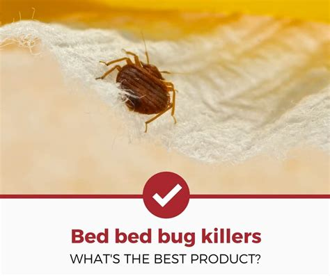 best bed bug exterminator best bed bug killers for your home complete 2017 guide