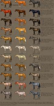 buckskin color color chart by magicwindsstables on deviantart
