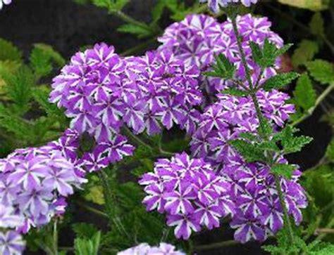 exotische potplanten met bloem vaste bloeiende tuinplanten winterhard potplanten buiten