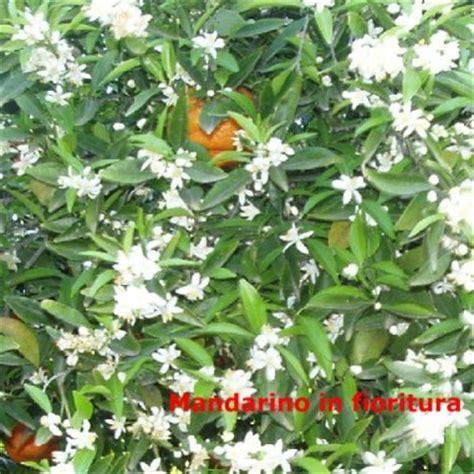 fiori gialli messina gli agrumi prodotti agricoli produzioni provincia di catania