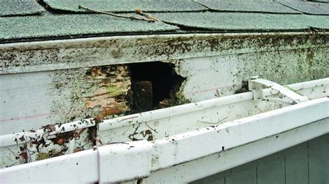 replace shed roof
