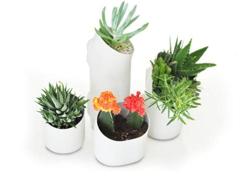 Urbio Wall Planter by Wall Planters