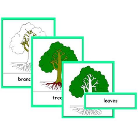 montessori tree printable montessori parts of a tree cards pdf file
