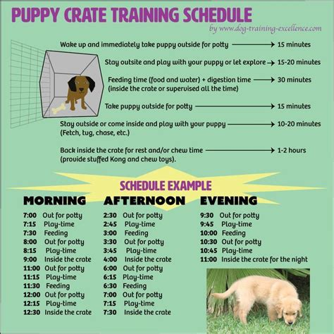printable puppy schedule free printable puppy crate training schedule the best