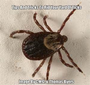 how to get rid of ticks in your home how to get rid of ticks in your yard and keep them away