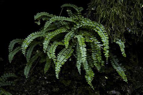cave plants introduction