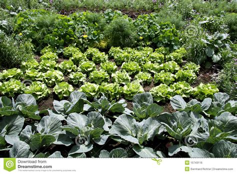 Vegetable Garden Royalty Free Stock Image Image 15743116 Vegetable Garden Pictures Free