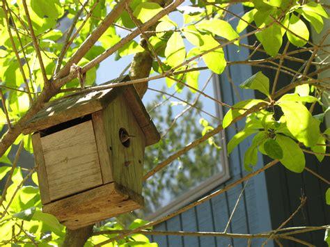 house wren the squirrel nutwork