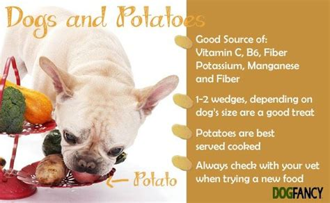 can yorkies eat potatoes 59 best images about baby shower on baby bodysuit baby and sheet cakes