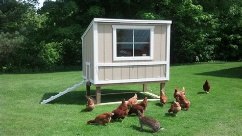 backyard chickens coops green city growers farming backyard chicken coops