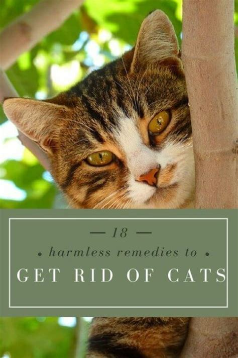 18 home remedies to get rid of cats from your garden or yard