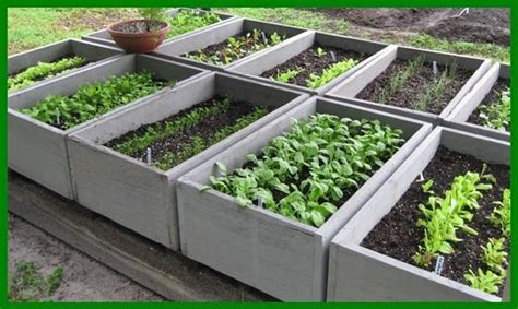 fare un orto in giardino orto in giardino ortaggi orto giardino