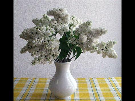 Aspirin In Flower Vases by Uses Of Vinegar In The Garden Boldsky