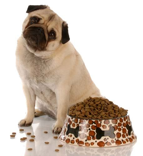 pug puppy diet best food for pugs 2018 how to feed what to feed pugs