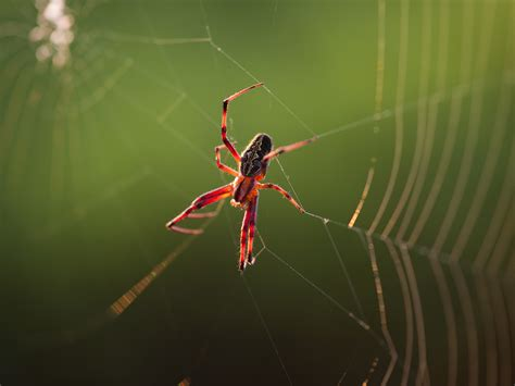 web on spiders listen to their webs innovators