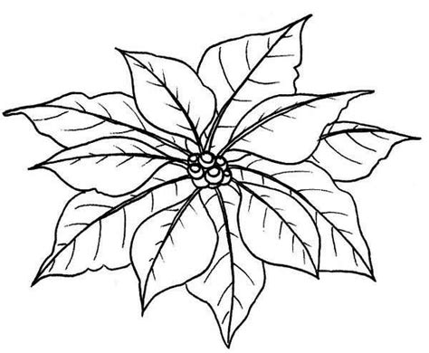 Poinsettia Outline Coloring Home Poinsettia Coloring Page