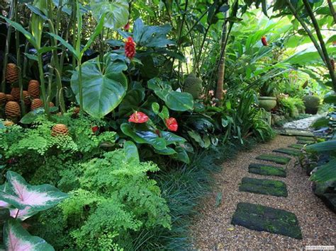 tropical plants for backyard 14 cold hardy tropical plants to create a tropical garden