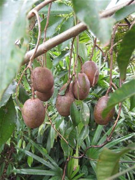 vegetables peterson peterson pawpaws products susquehanna fruit