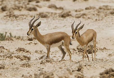 imagenes de animales del desierto animales del desierto el sahara y los desiertos polares