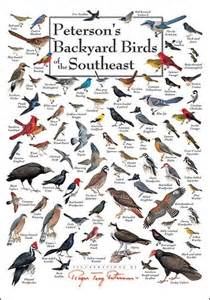 1000 images about wildlife identification charts on