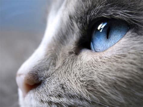 blue cat s eye wallpapers and images wallpapers