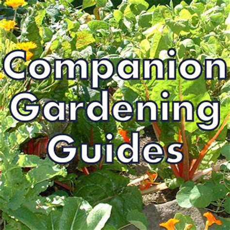 gardening guides gardening with hill collection of companion planting