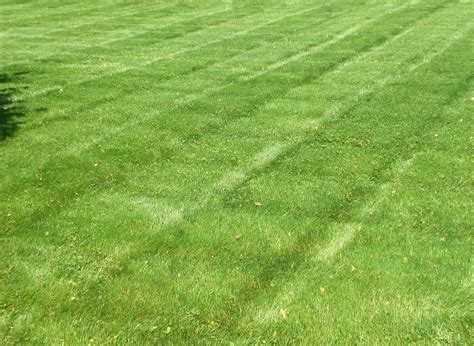 lawn care by the professionals at r d lawn care