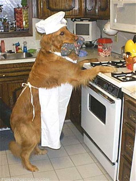 how to cook dogs on stove critters in the kitchen