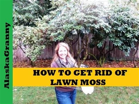how to get rid of lawn moss youtube
