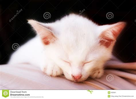 Angelic Black Cat cat photo angelic sleep black background stock image