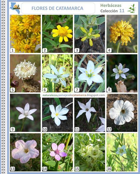 imagenes flores silvestres sus nombres naturaleza y paisajes de catamarca flores silvestres de