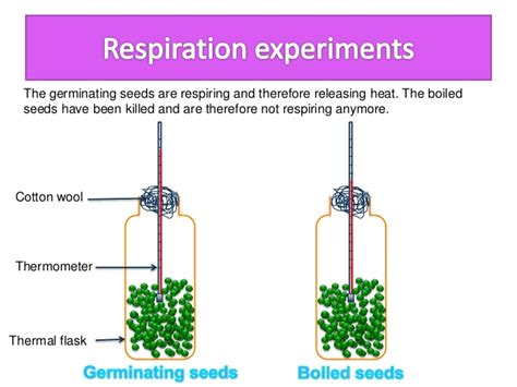 design an experiment to determine if plants respire biology form 4 chapter 7 respiration part 1