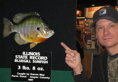 Illinois Of State Records Ilbluegill 2 Bluegill Big Bluegill