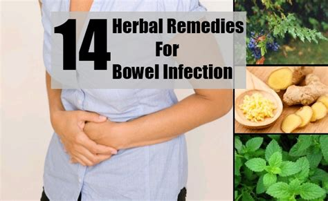 14 herbal remedies for bowel infection how to treat