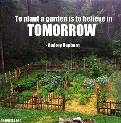 Vegetable Garden Quotes Vegetable Garden Quotes Like Success