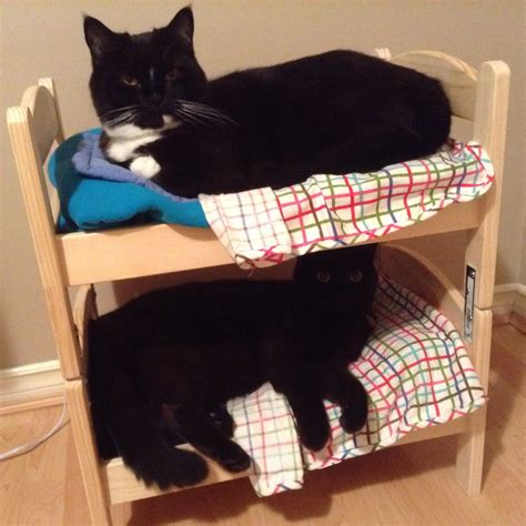 how to make a bunk bed how to make a cat bunk bed for your kitties