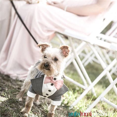 Wedding Attire For Dogs by Wedding Attire In Grey Formal Suit For With Bow Tie