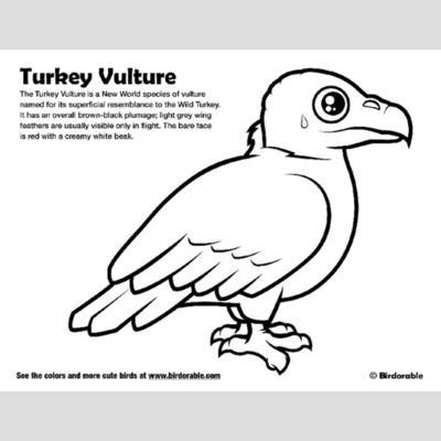 turkey vulture coloring page vultures of the world cute birds by birdorable