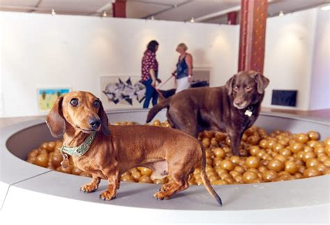 car fans for dogs world s first art exhibition for dogs features fountains