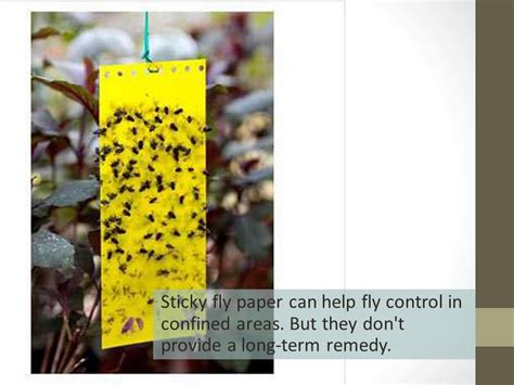 Make Your Own Fly Paper - make fly paper 28 images how to make the fly paper