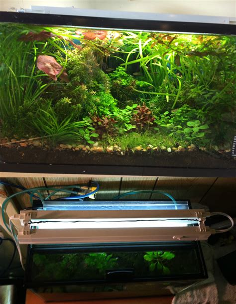 best light for planted tank aquarium lights lighting which to choose fish